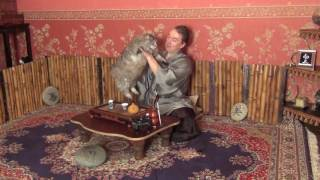 Съемки съемок! #Отношение и поверья к #котам в Японии. Фролов Олег
