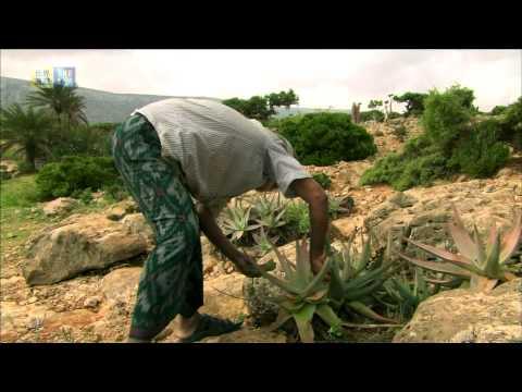Socotra Archipelago (UNESCO/TBS)