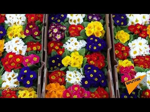 Фейерверк запахов и оттенков – цветочный рынок Еревана шокирует своим разнообразием