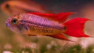 Breeding Fish to Help Fund You…
