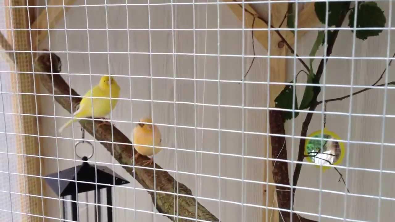 Voliere exterieur fait maison canari youtube - Petite cage oiseau deco ...