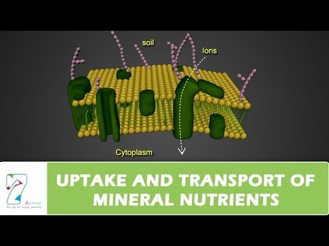 UPTAKE AND TRANSPORT OF MINERAL NUTRIENTS
