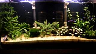 231. Tepid water low tech planted tank