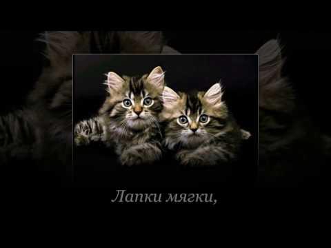 Скачать котиков. День кошек. Видео открытки.