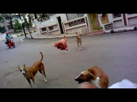 Me Feeding Stray Puppies  On 23rd June 2016