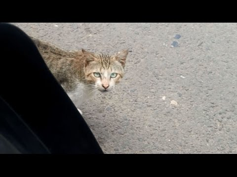 Cute curious cat on the streets of Jakarta
