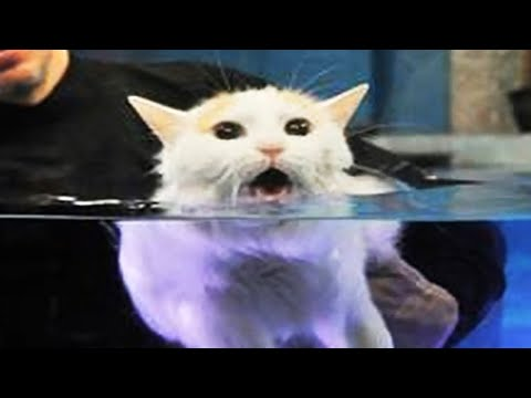 Cats Hate Water! - Funny Cats In Water Compilation 2020 #1