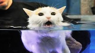 Cats Hate Water!  Funny Cats in Water Compilation 2020 #1