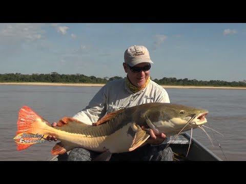 Peixe Arara do Rio Araguaia - Bloco 2