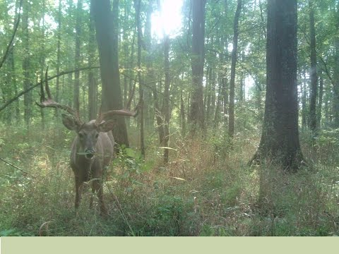 Maryland Hunting