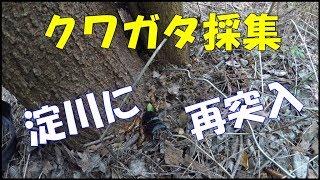 淀川河川敷攻略法 ① クワガタが捕れる樹木の種類は限られます。やみくも...