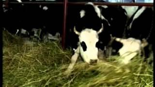 Фермерский молочный комплекс в Кузбассе СУ 26 12 15
