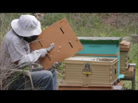 UPDATE   APIMAYE THERMO HIVE BEE PROGRESS