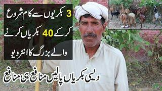 Desi Goat Farming in Pakistan || Old Farmer Tips For Goat Farming in Urdu || Profitable Goat Farming