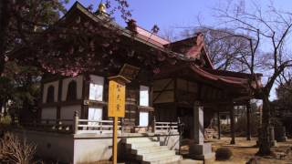 Sense of spring in Narita city 成田市花巡り 河津桜 梅林 4K α6500 S-log2