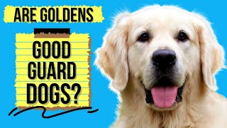 Are Golden Retrievers Good Guard Dogs? (Or Too Friendly)