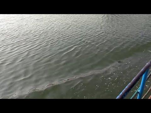 Pattiseema(Pattisam) Boat Shikaar on GODAVARI River (Part 1)
