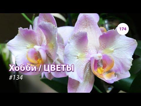 174#134 / Хобби Цветы / ОРХИДЕИ ЛЕГАТО 06.2019