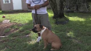 Dog Training : How To Train Aggressive Dogs