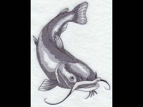 speed drawing catfish youtube