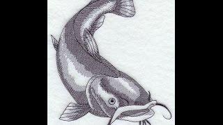 speed drawing catfish