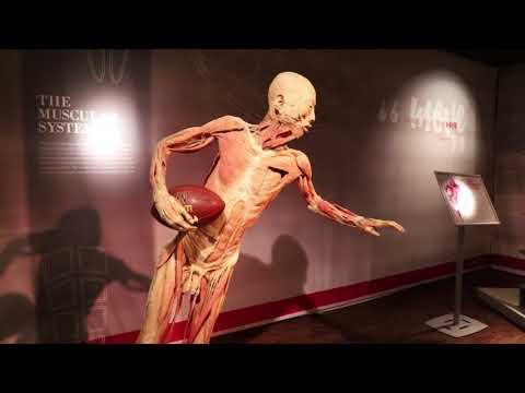 BODIES Exhibition at Bally's Hotel, Las Vegas