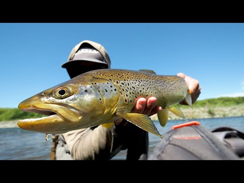 High Country River, Big Fish Crush Dry Flies!