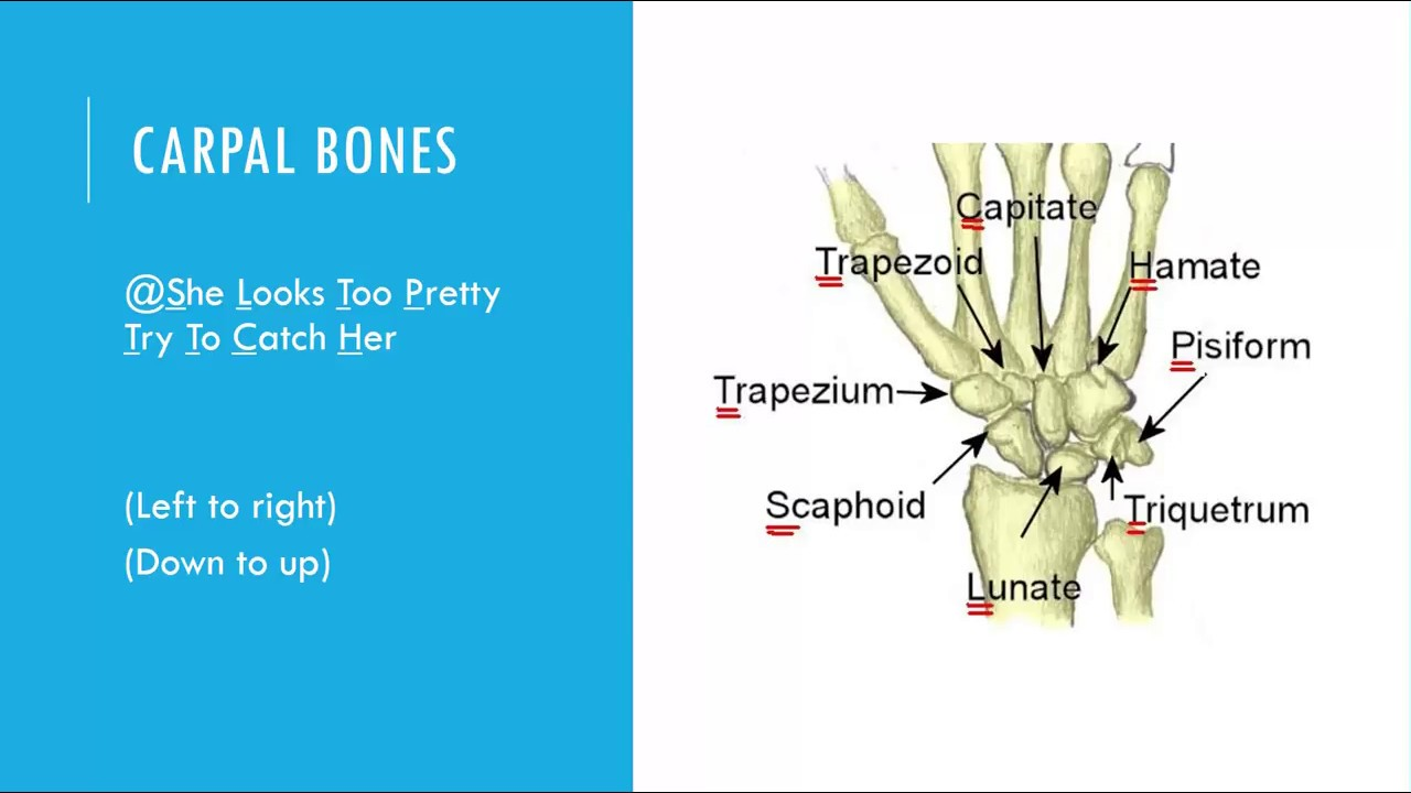 Foot Bones Walkthru - YouTube