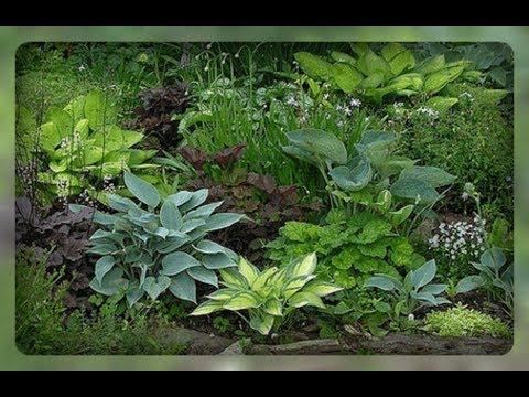 Растения в саду с декоративной листвой, на которые стоит обратить внимание.