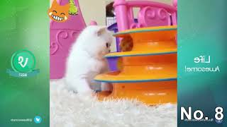 Cute cat funny moments you will die laughing - Funny cat compilation
