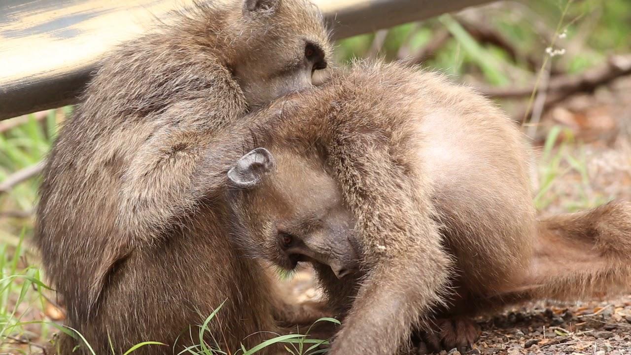 Animal Behavior - Hluhluwe Game Reserve