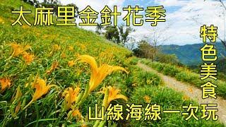 2019太麻里金針花季 多良車站+華源海灣+金針花料理 Taitung Taimali kinchen mountain and beach