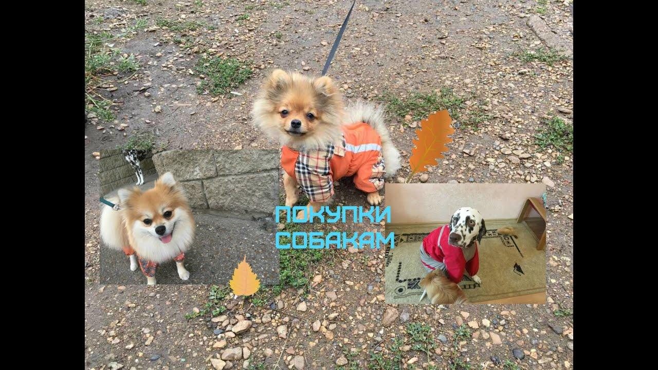 Покупки из зоомагазина для собаки видео виктория крокус