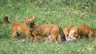 Image of Wildlife treasures of Kerala