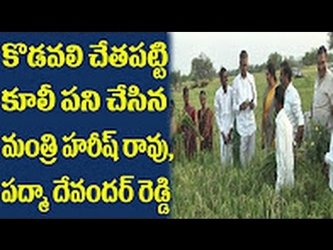 Exclusive Video - TRS leaders Harish Rao and Padma Devender Reddy do farming | CM KCR orders | DPTV