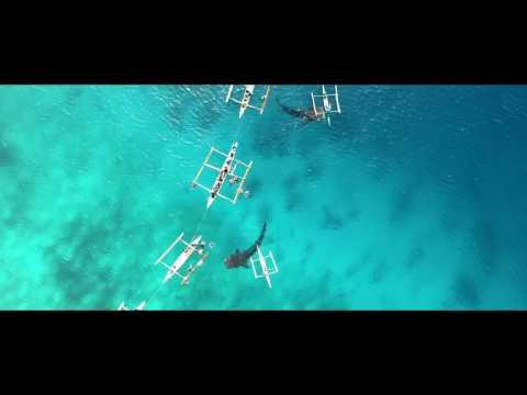 Unbelievable Whale Shark Watching in Oslob Philippines w/ DJI MAVIC Pro Drone