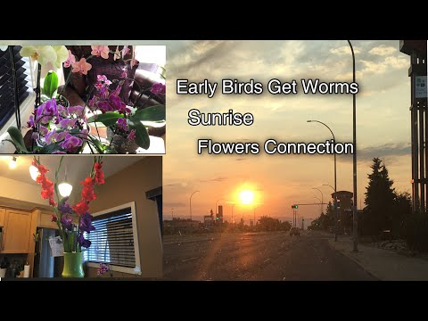 FilCanadianLife:Early Birds Get Worms Quote What Does It Mean/Sun,Flower Connection/AliciaD Vlogs