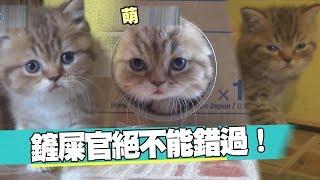 【萌寵】上班不blue!三隻小貓超療癒❤❤