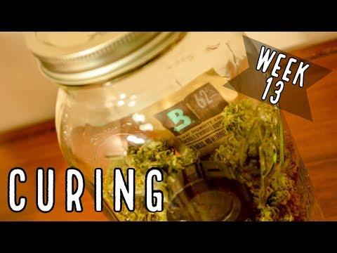 Week 13: How To Cure Autoflowers