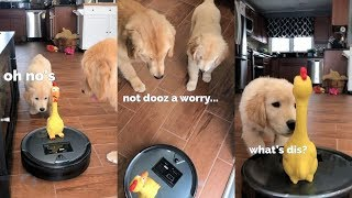 Dog REACTS to Robotic Vacuum!