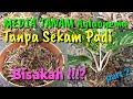 Gambar cover MEDIA TANAM AGLAONEMA ALTERNATIF TANPA  SEKAM PADI Part 2