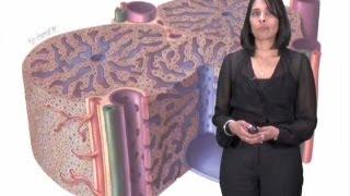 Sangeeta Bhatia Part 2: Microscale Liver Tissue Engineering