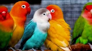 Zwierzęta domowe   film dla dzieci