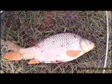 марьевских прудах рыбалка фото