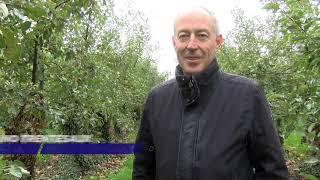 Yvelines | Fin de saison pour les pommes dans les vergers de Plaisir