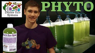 Phytoplankton Info- Should You Dose it?