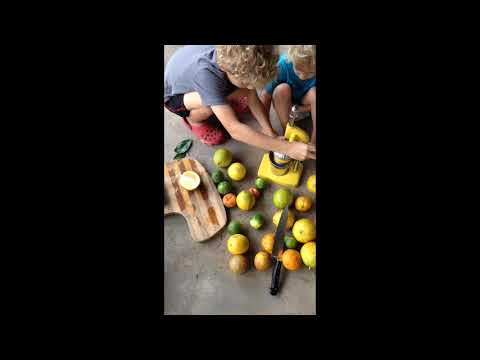Lemonade From Fresh Lemons