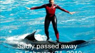 Killer Whale drowns trainer Dawn Brancheau at seaworld
