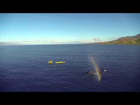 Maui Kayak Tour   Snorkel & Swim With Turtles