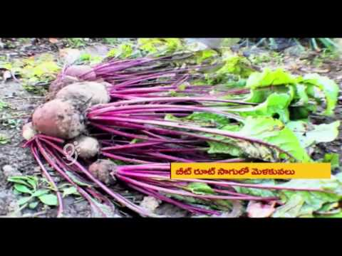 Beetroot, Aloe Vera and Onion Cultivation - Eruvaka - 26-09-2014 - 99tv